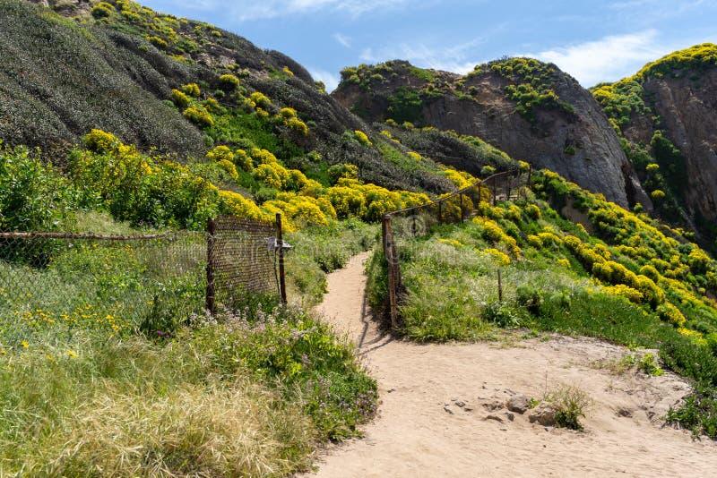 Trailhead au point Dume dans Malibu la Californie amène à un bluff donnent sur Wildflowers de coreopsis géant tout au long de la  photographie stock