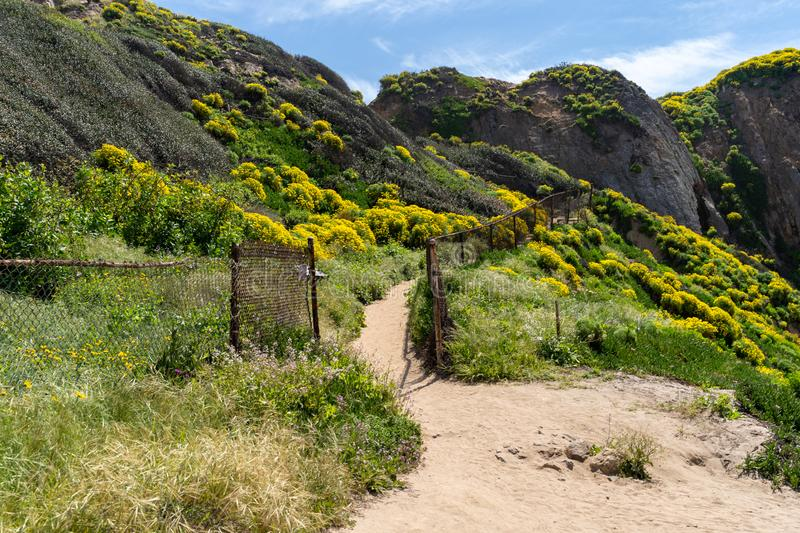 Trailhead at Point Dume in Malibu California leads up to a bluff overlook. Giant coreopsis Wildflowers all along the sandy trail stock photography