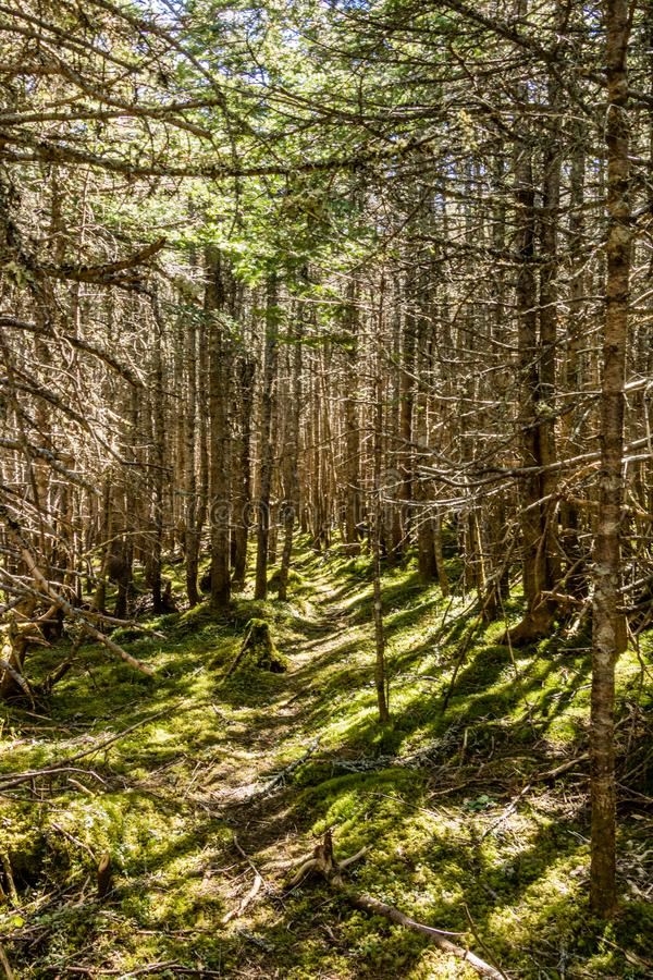 Trails through the forest and along the boardwalks around Berryhill Pond, Gros Morne National Park, Newfoundland, Canada stock photography