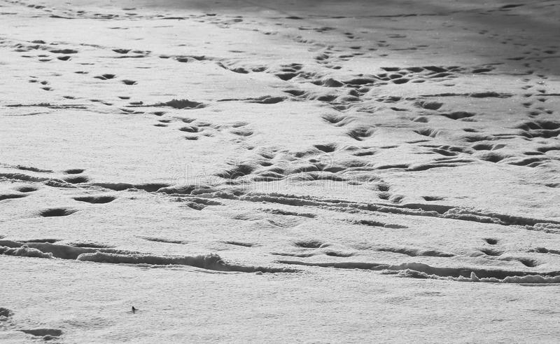 Download Trails in the snow stock image. Image of walk, white - 83710809