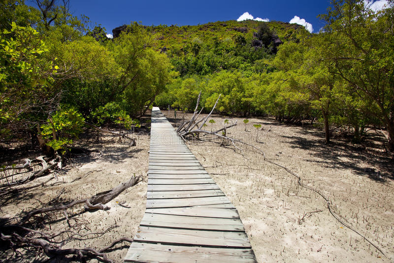 Download Trailway Through The Mangrove Forest Stock Photo - Image of outside, holiday: 39503374