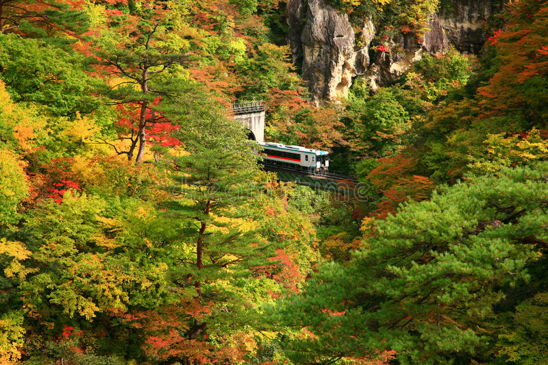 Train coming out from tunnel during autumn season in Naruko gorge royalty free stock photography
