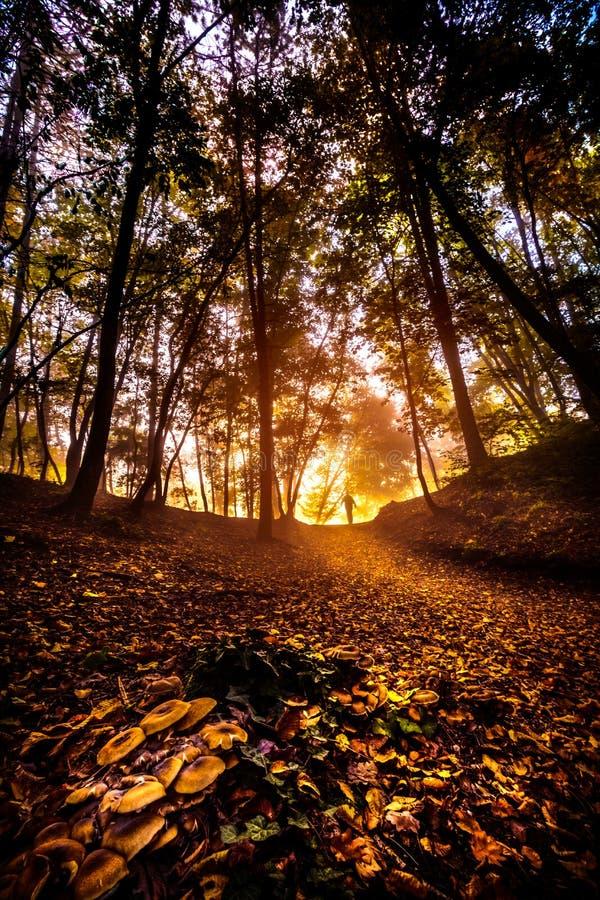 Train de forêt en automne avec l'homme sur le dessus de la traînée images stock