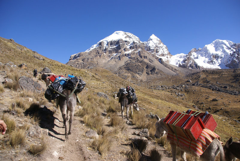 Train de mule, chargements de transport photos stock