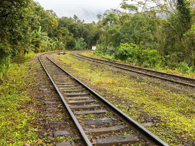 Train tracks. In brazilian rain forest royalty free stock images