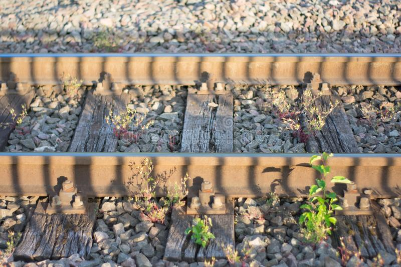 Train tracks in golden hour royalty free stock photos