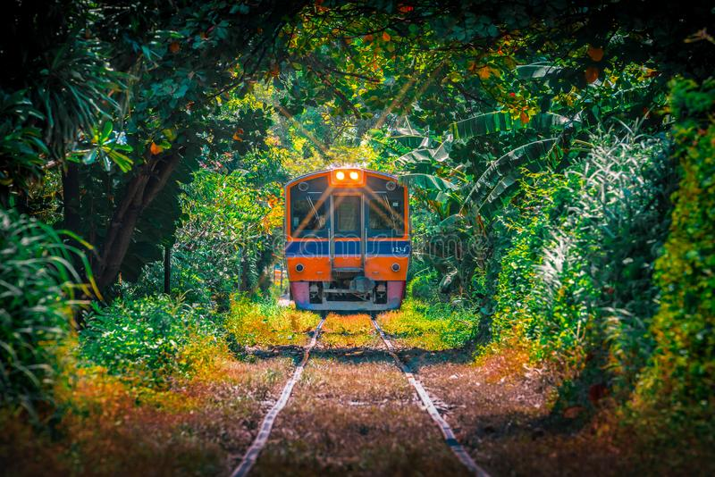 Train through the tree tunnel , Thai Railway Wongwain yai to Mahachai Line in Bangkok,Thailand stock photo
