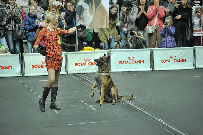 Trained dogs perform at the show with trainers. Performances at the International Dog Show, St. Petersburg, Russia royalty free stock photos
