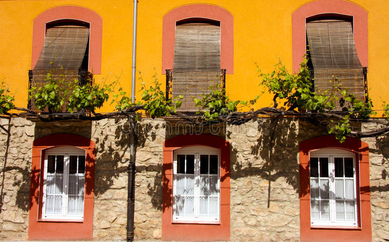 Trained vine on street facade banos de montemayor stock - Banos montemayor ...