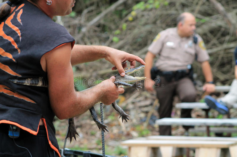 Trainer holding Baby alligator royalty free stock photos