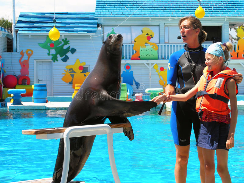The trainer of wild animals at work. Antibes, France - July 13, 2005: Work trainer seals at an amusement park Marineland. Seal shakes hands with a girl under
