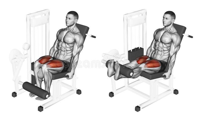 trainieren Beinerweiterung im Simulator auf Oberschenkelmuskel vektor abbildung