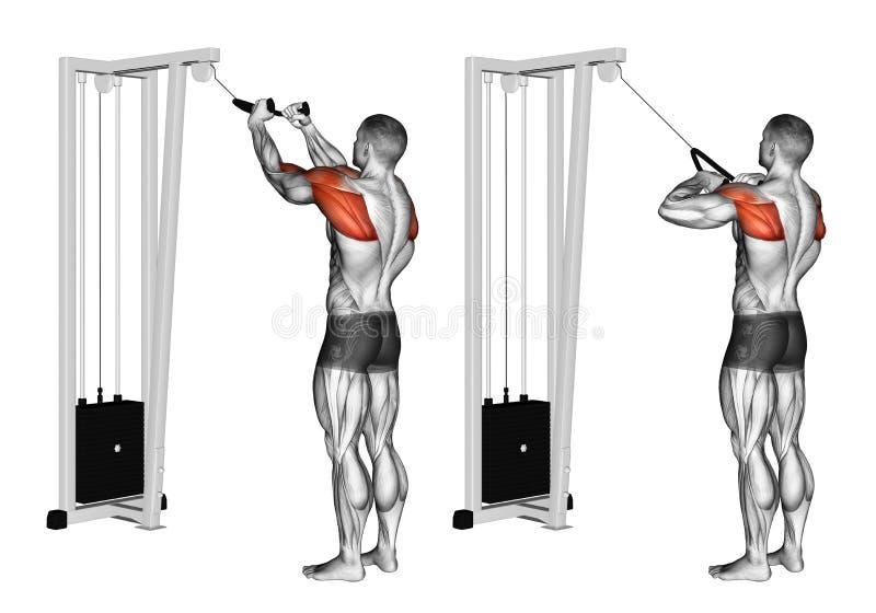 trainieren Kabel-Seil-Rückseite Delt-Reihen stock abbildung