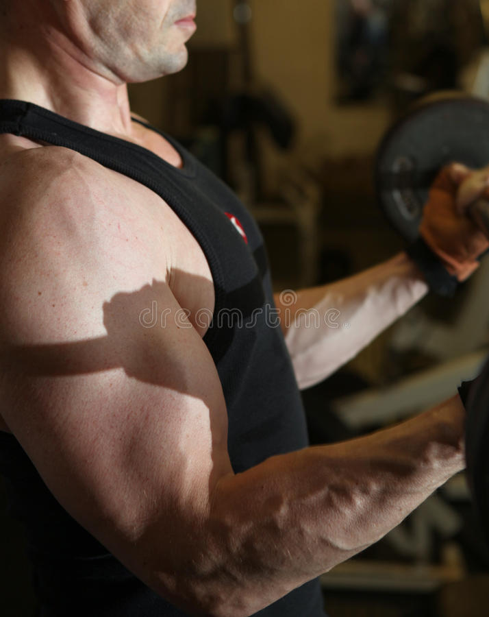 Training barbell gym strength stock images