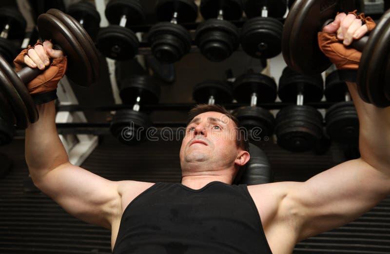 Training dumbbells gym pecks royalty free stock images