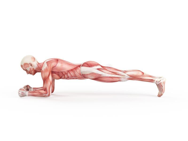 Training - Planke lizenzfreie abbildung