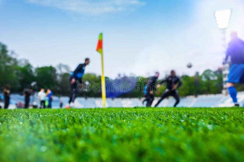 Training soccer players on football stadium. Green grass at foreground. Defocused. In the lens shines backlight soffit royalty free stock photo