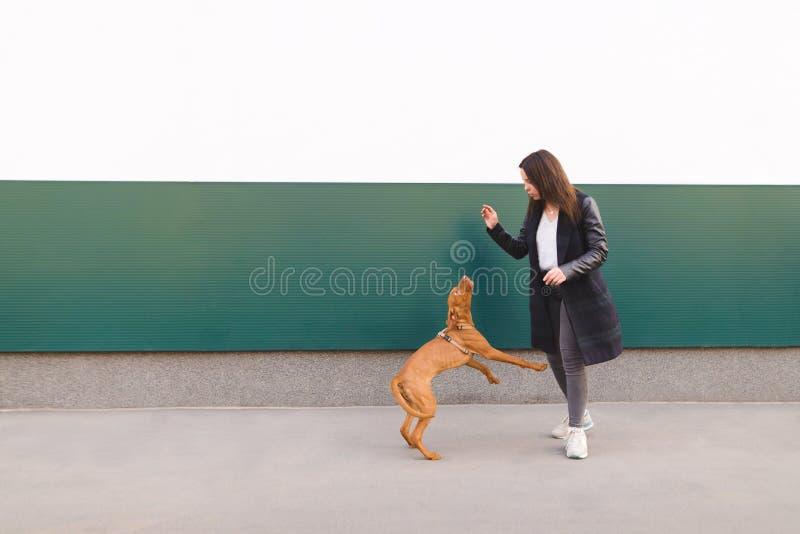 Trains de femme un chien dans la perspective du mur Marche avec un chien dans la ville photographie stock libre de droits