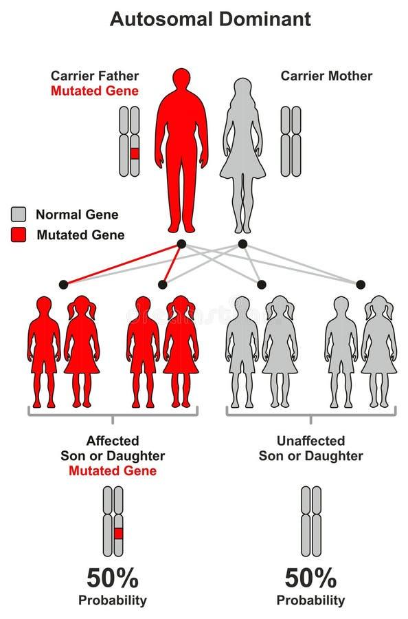 Trait héréditaire dominant Autosomal illustration stock