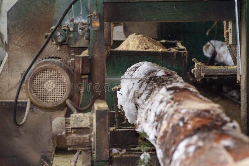 traitement de bois La coupe ouvre une session les conseils Dans le processus d'hiver un arbre photographie stock libre de droits