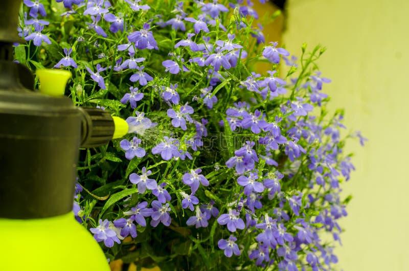 Traitement de pesticide des fleurs, des arbres et des plantes de jardin photographie stock libre de droits