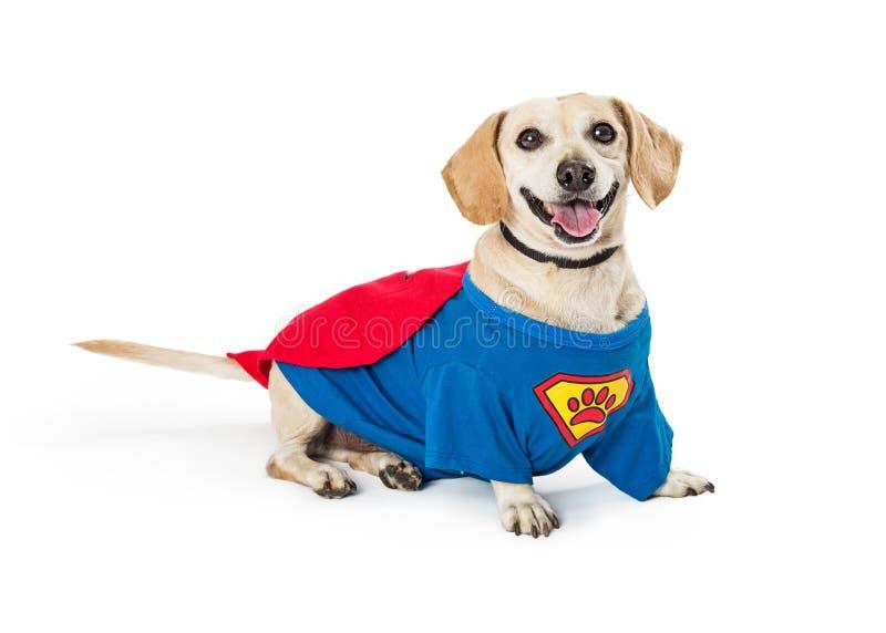 Traje del superhéroe del perro que lleva feliz imágenes de archivo libres de regalías