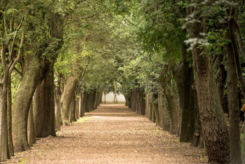 Trajeto alinhado árvore imagens de stock royalty free