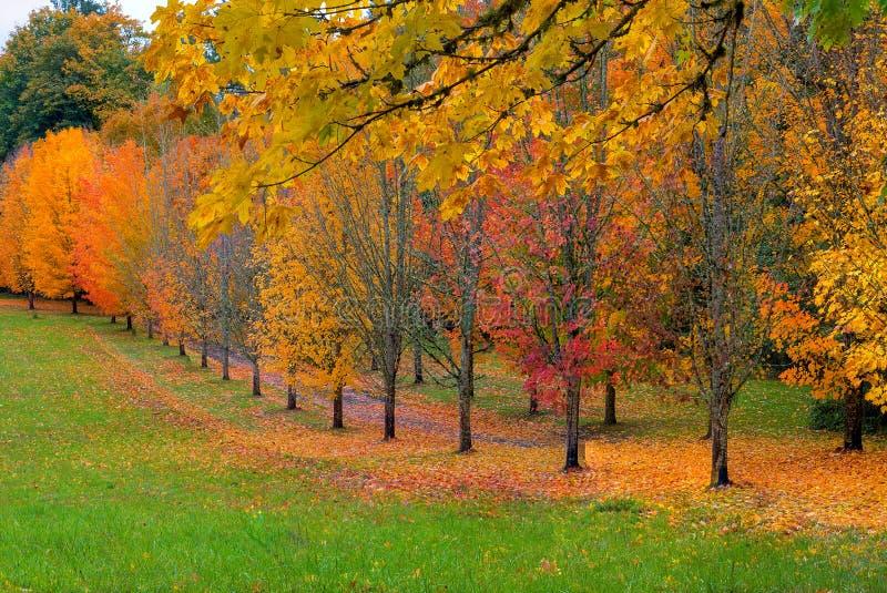 Trajeto alinhado árvore com folhagem de outono fotografia de stock
