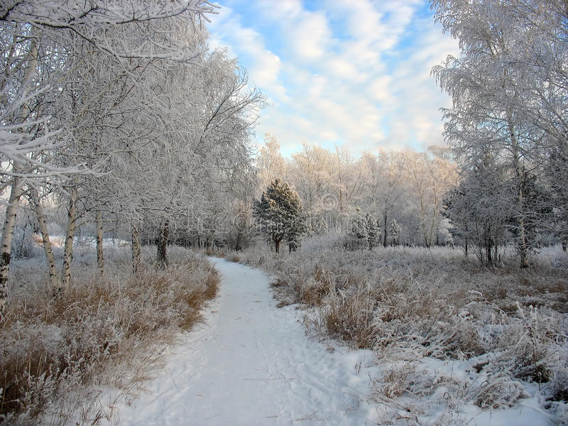 Trajeto ao parque snow-covered do inverno. Árvores gelados foto de stock