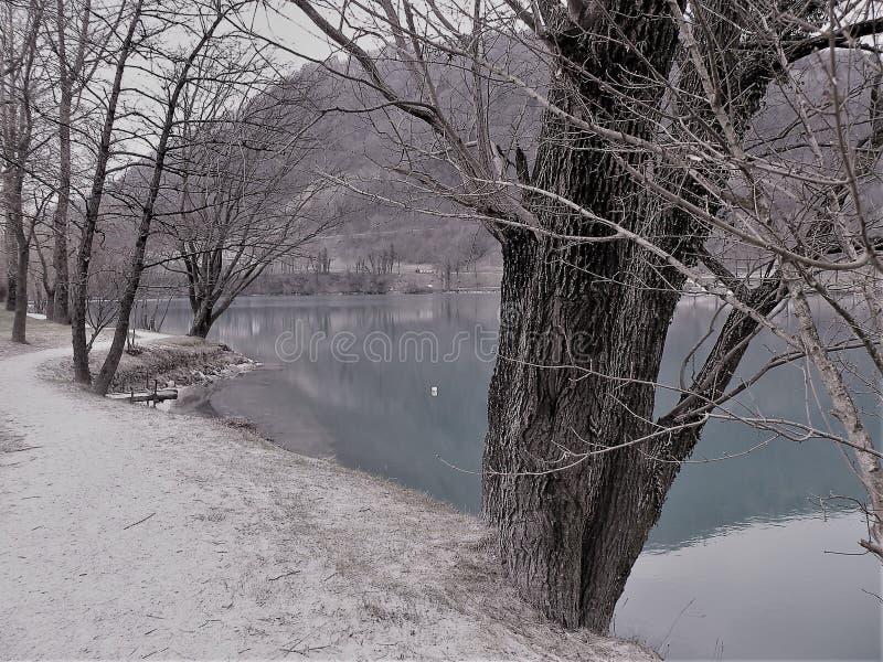 trajeto arenoso ao longo do lago com muitas árvores imagem de stock