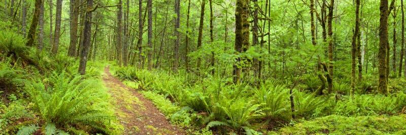 Trajeto através da floresta úmida luxúria, desfiladeiro do Rio Columbia, EUA imagem de stock royalty free