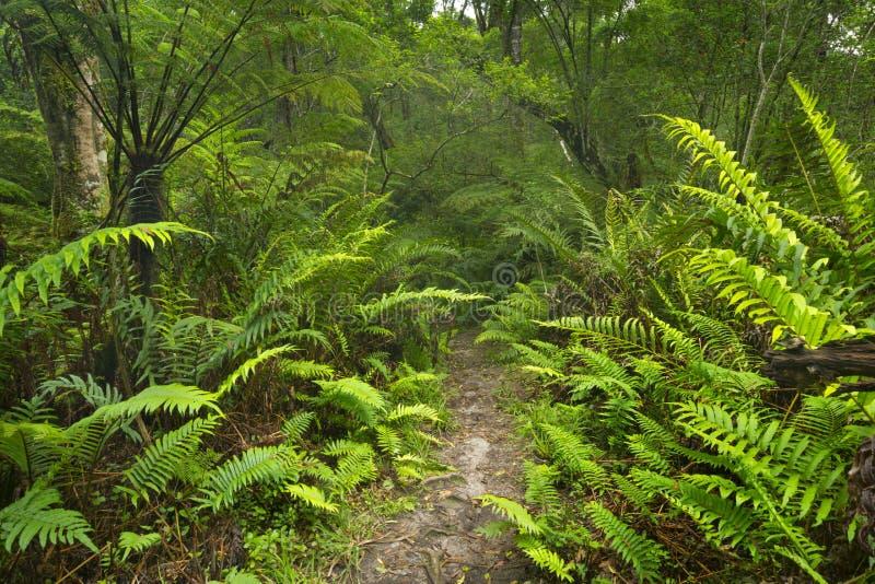 Trajeto através da floresta úmida na rota NP do jardim, África do Sul imagens de stock