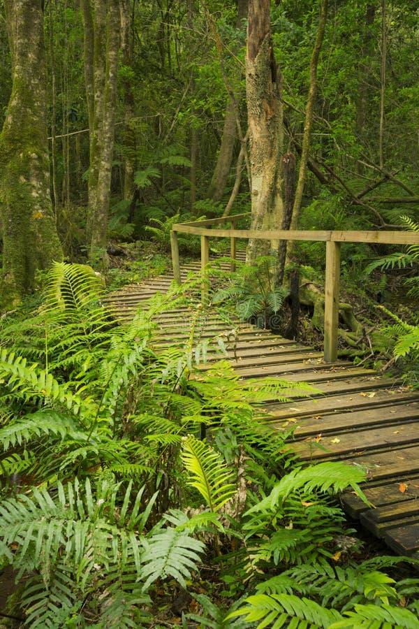 Trajeto através da floresta úmida na rota NP do jardim, África do Sul imagens de stock royalty free