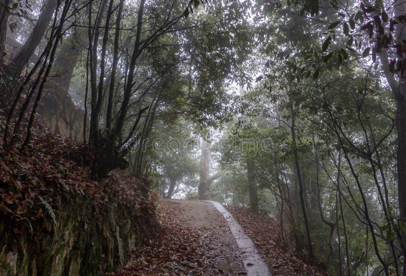 Trajeto através da floresta, castelo de Bitchu Matsuyama, Japão foto de stock