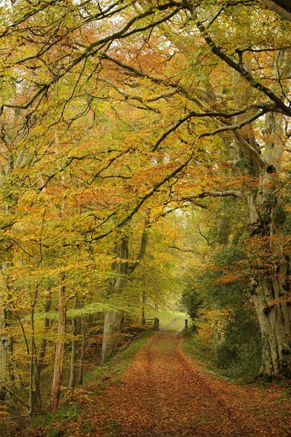 Trajeto através das árvores do outono fotografia de stock royalty free