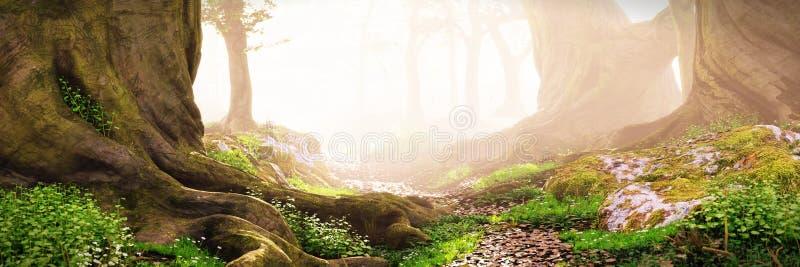 Trajeto através das madeiras, floresta mágica da fantasia no nascer do sol ilustração do vetor