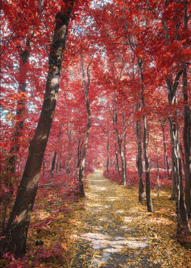 Trajeto através das madeiras no outono fotos de stock