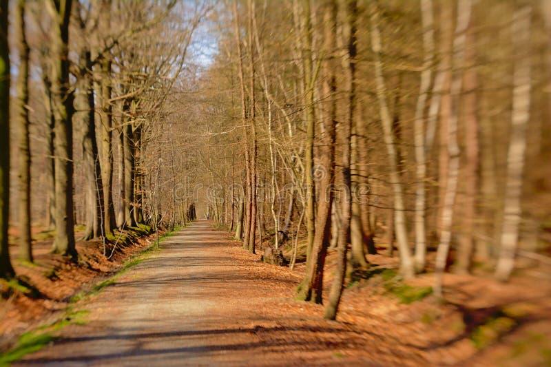 Trajeto através de um fundo ensolarado da floresta do inverno, foco seletivo com borrão lensbaby fotografia de stock