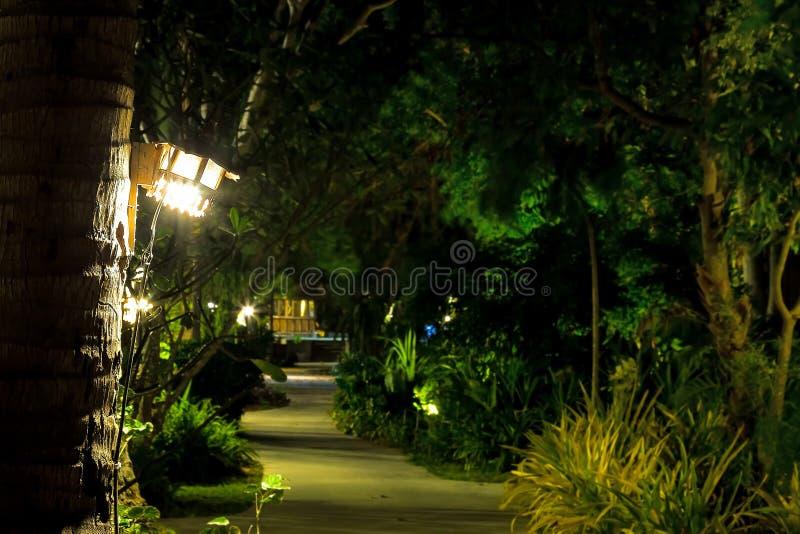 Trajeto através de um jardim tropical iluminado por lâmpadas de madeira em palmeiras Espaço da cópia no centro borrado imagens de stock royalty free