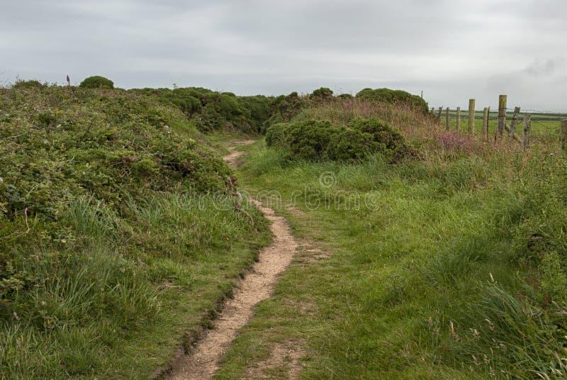 Trajeto através do tojo perto de Portreath, Cornualha Reino Unido foto de stock