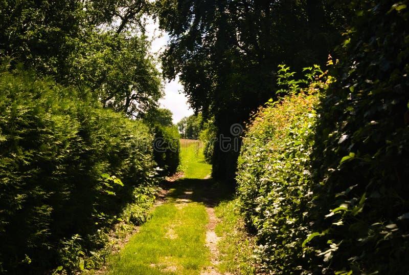 Trajeto através dos arbustos verdes no Sun imagem de stock