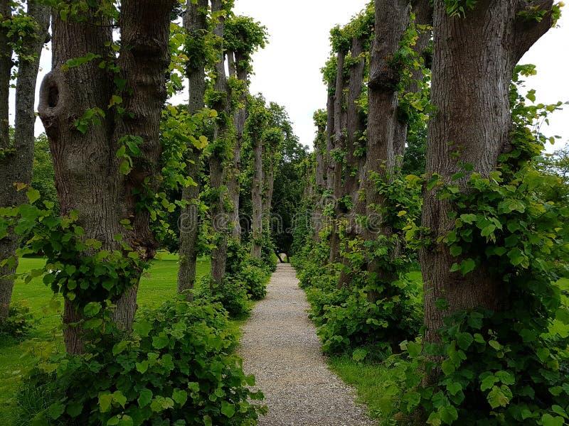 Trajeto bonito do jardim fotografia de stock