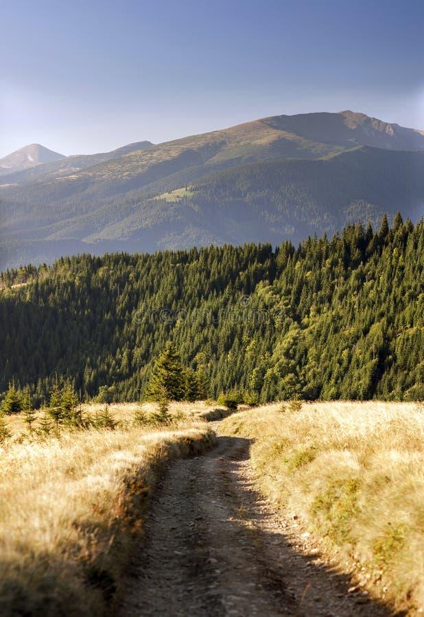 Trajeto bonito do outono à floresta nas montanhas foto de stock