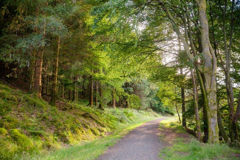 Trajeto cênico através da floresta em Escócia Reino Unido foto de stock royalty free
