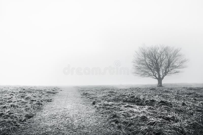 Trajeto com árvore solitário fotografia de stock
