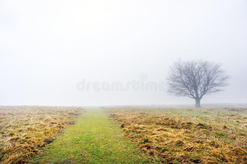 Trajeto com árvore solitário fotos de stock royalty free