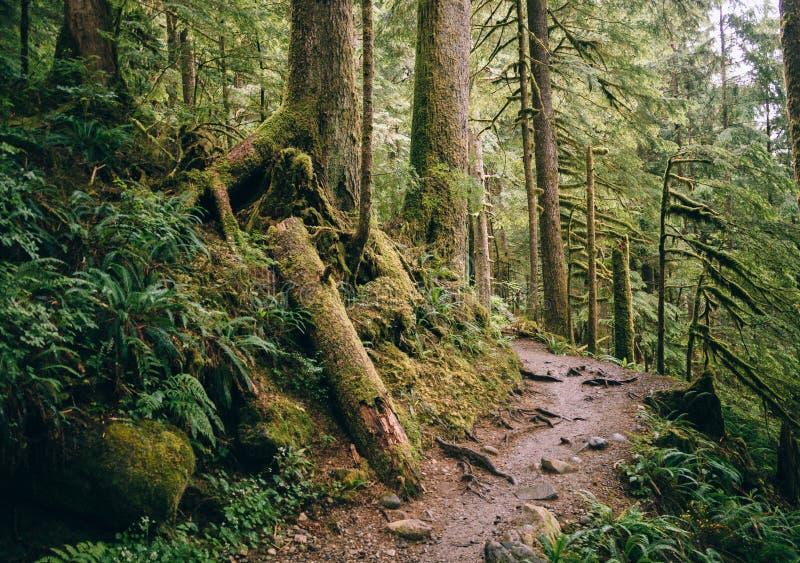 Trajeto com o Mt Floresta nacional do padeiro-Snoqualmie imagem de stock royalty free