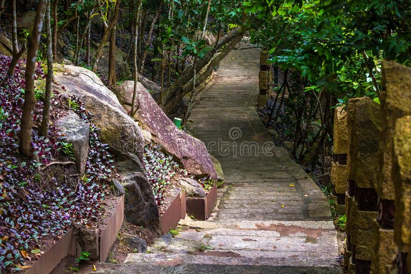 Trajeto concreto, colocado no paraíso tropico FO da baía de Yalong da floresta fotografia de stock