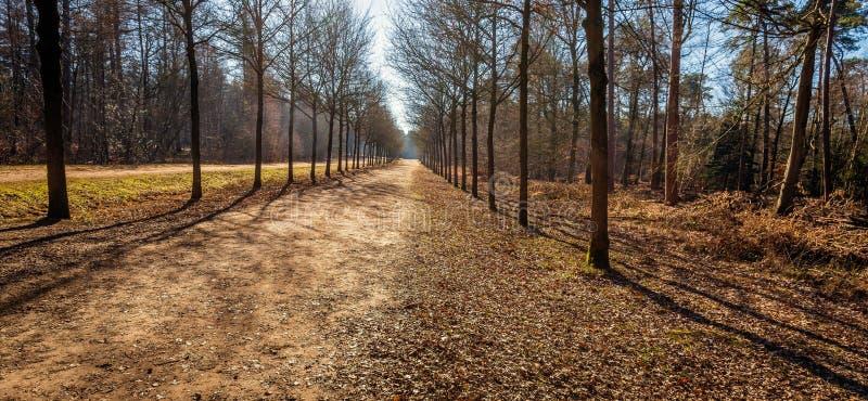 Trajeto convenientemente infinito em uma floresta holandesa fotografia de stock