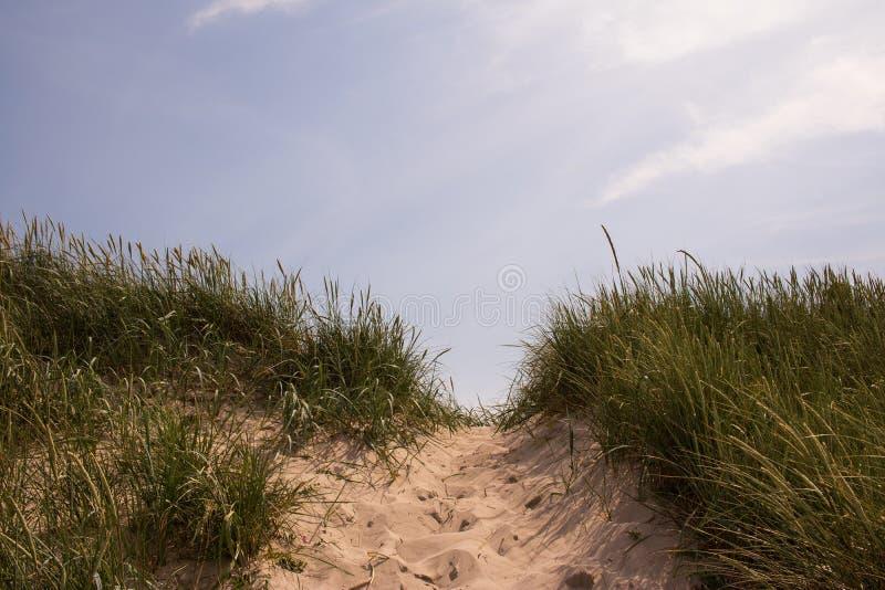Trajeto da areia ao mar imagens de stock